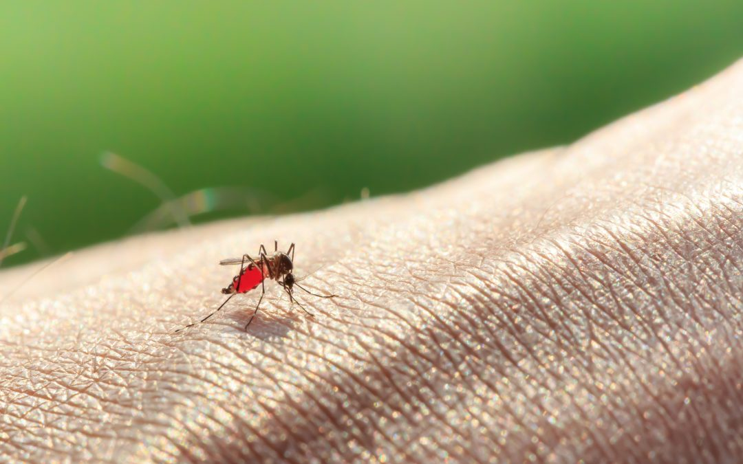 Women leading the charge in the fight against malaria